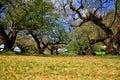 Paisagem do jardim da árvore de ameixa Imagem de Stock