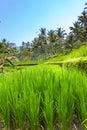 Paisaje tropical. Indonesia. Bali Fotografía de archivo libre de regalías