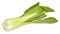 Pak Choi Chinese Cabbage Royalty Free Stock Photo