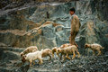 Pakistani shepherd walking on a mountain trail in the area of hindu kush in northern pakistan Royalty Free Stock Photography