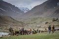 Pakistani shepherds Royalty Free Stock Photo