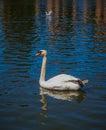 Palace of Fine Arts Pond swan