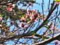 Arbol De Durazno // Peach Tree