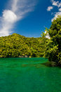 Palau shoreline jungle on islands in tropical pacific Stock Photography