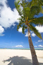 Palau tropical beach and palm trees Stock Photography