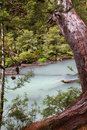 Pale blue river in the forest Royalty Free Stock Images