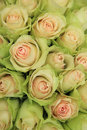 Pale pink roses in a wedding arrangement bridal decorations centerpiece Stock Photography