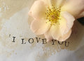 Pale rose with I love you words Royalty Free Stock Photo