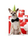 Pale yellow doggy near the presents Royalty Free Stock Photography