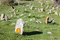 Paleolithic cemeteries at petrota greece Stock Photography
