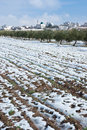 Palestine in winter view of west bank israel Royalty Free Stock Photography