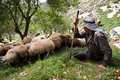 Palestinian shepherd Stock Photography