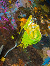 Palette knife on a palette for mixing oil paints