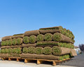 Pallets of sod for new lawn Stock Photography