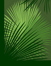 Palm Abstract Background Royalty Free Stock Photos