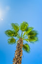 Palm against the blue sky Stock Photos