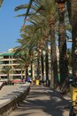 Palm alley the in playa de palma majorca spain Royalty Free Stock Image