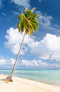 Palm and beach, Maupiti, French Polynesia Stock Image