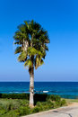 Palm on the beach nissi beach cyprus summer day Stock Photos