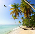 Palm beach tobago near pigeon point west indies with frigatebird Royalty Free Stock Photo