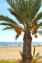 Palm and beach tree on the with the sea the people in the background Royalty Free Stock Photography