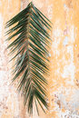 Palm branch on old vintage antique wall as Palm sunday and Easte Royalty Free Stock Photo