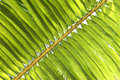 Palm branch Royalty Free Stock Photo