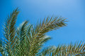 Palm branches against the blue sky Royalty Free Stock Photo