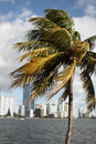 Palm and buildings Royalty Free Stock Photography