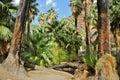 Palm Canyon, Palm Springs