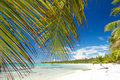 Palm on caribbean sea, island Saona Royalty Free Stock Image