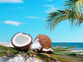Palm and coconuts branch over two by the shore Royalty Free Stock Photo