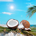 Palm and coconuts under the sun branch over two by shore Royalty Free Stock Photography