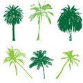 Palm collection for your design Stock Photography