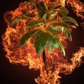 Palm in fire Royalty Free Stock Image