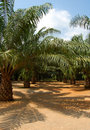 Palm forest Stock Images