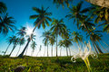 Palm forest Royalty Free Stock Photos
