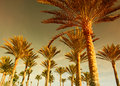 Palm forest at sunset Royalty Free Stock Images