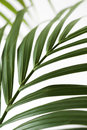 Palm frond. Stock Photos