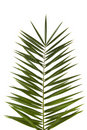 Palm Frond Stock Photography