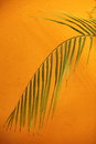 Palm frond against a textured orange wall delicate drooping green with copyspace conceptual of spa treatment or tropical Royalty Free Stock Photo