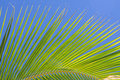 Palm frond green against blue sky Royalty Free Stock Image