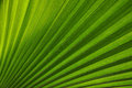 Palm frond natural abstract pattern of a Royalty Free Stock Images