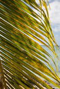 Palm frond on ocean closeup of a with sky and in background Stock Photos