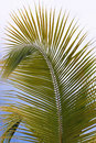 Palm frond a pretty against a blue sky Royalty Free Stock Photography