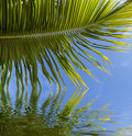 Palm frond reflected in water Royalty Free Stock Images