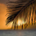 Palm frond sunset. Stock Photos