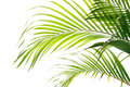 Palm fronds waving in the wind, Royalty Free Stock Photo