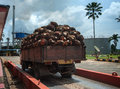Palm fruit on lorry Royalty Free Stock Photo
