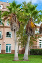 Palm garden in front of house spain Royalty Free Stock Photography